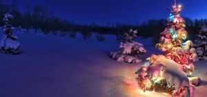 Christmas tree glowing at night in snow, Alberta, Canada
